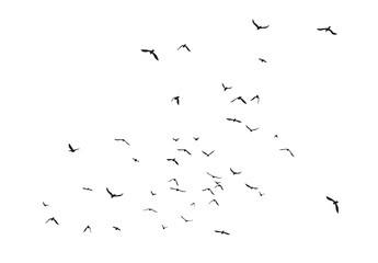Black vector flying birds flock silhouettes isolated on white background Fotomurales
