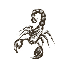 vector sketch of a scorpion in retro style on a white background