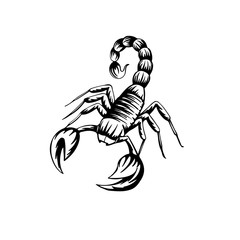 vector illustration of a stylized scorpion on a white background