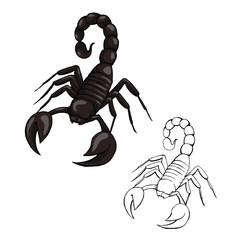 vector illustration scorpion isolated on white background