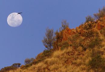 KITE FLIES OVER AUSTRALIAN LANSCAPE BENEATH FULL MOON IN ALICE SPRINGS.