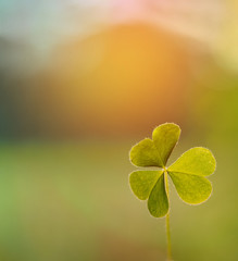 Close up Clovers leave with sun light and blurred green nature background