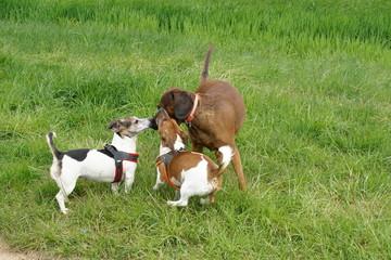 Hundemeetung - Treffen mit Aushecken - Was machen wir?