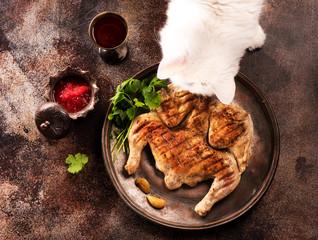 White cat eating fried chicken