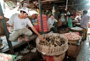 A Cambodian market vendor awaits customers at his poultry stall in a local market in Phnom Penh on J..