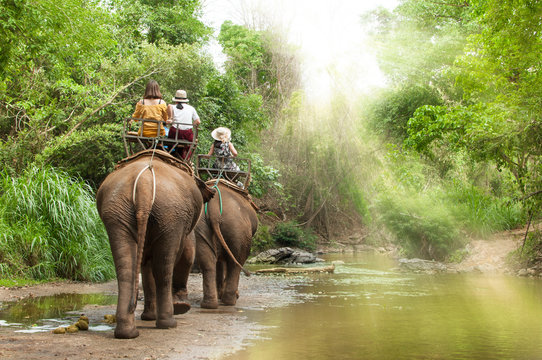 Group tourists to ride on elephant in forest chiang mai, northern Thailand