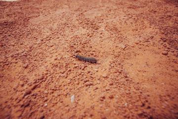 caterpillar on sand