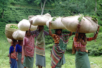 Women return home after plucking green leaves at a tea garden in Bangladesh's northeastern Sylhet di..