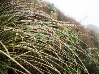 Wet grass, Egmont national Park, New Zealand - Stock Image