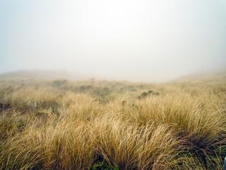 Misty conditions, Egmont National Park, New Zealand - Stock Image