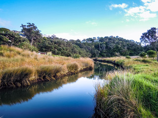 Idyllic nature of Northland, New Zealand - Stock Image
