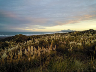 Idyllic sunrise at Te Puia Springs in Kawhia, New Zealand - Stock Image