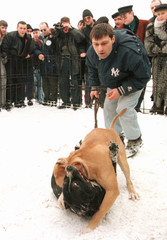 Spectators watch a dog fight with cash bets in Moscow.