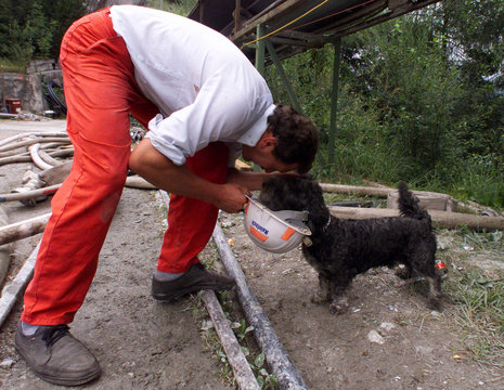 A DOG CARRIES THE HELMUT OF A RESCUE WORKER ON A DRILLING SITE IN LASSING.