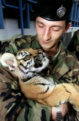"""An officer of the Croatian army's First brigade, nicknamed """"The Tigers"""", holds the brigade's mascot .."""
