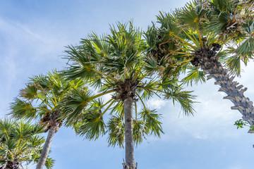 A several of palm tree beach