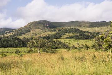 Grassland Savanna