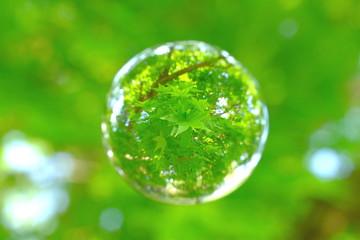 新緑を迎えたモミジの葉