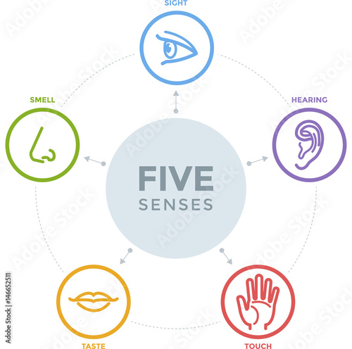Five senses with complex line icons in a mind map design stock five senses with complex line icons in a mind map design ccuart Choice Image