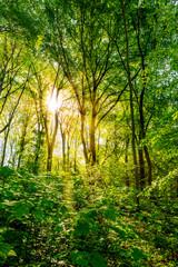 Wald im Frühling bei strahlendem Sonnenschein