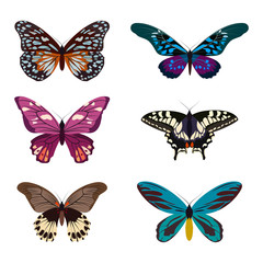 Big collection of colorful butterflies. Butterflies isolated on white.  illustration