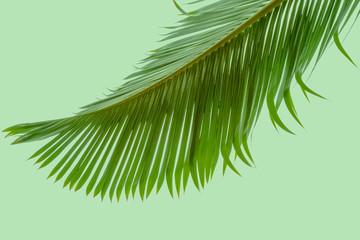 feuille de palmier sur fond vert
