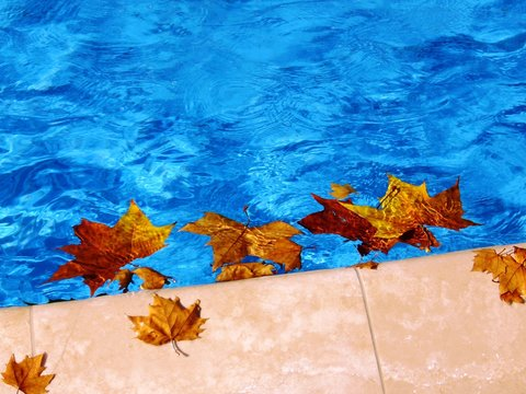 Autumn in the pool