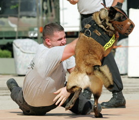 A U.S. military policeman, acting as a mock terrorist, struggles with a military dog during an anti-..