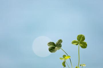 四つ葉のクローバーと青い海