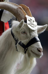 File photo of the regimental mascot of the First Battalion, the Royal Welsh regiment Billy Goat parading at the Millennium Stadium in Cardiff