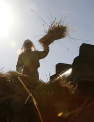 A farmer puts wheat in a harvesting machine during harvest season in Rmeish village