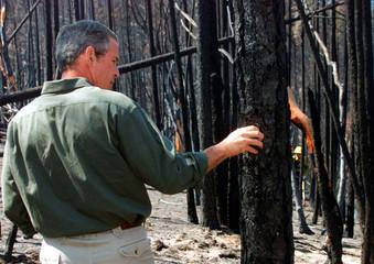 U.S. President George W. Bush crumbles the burned bark of a Douglas Fir tree as he toured the site o..
