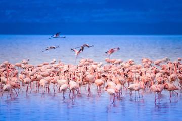 Foto op Canvas Flamingo Pink flamingo. Kenya.