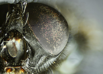 Fly's eye close-up view. Microscopic world.