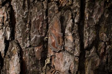 natural textures, tree macro,  tree bark