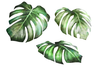 Set plants elements. tropical collection. illustration isolated on white background, exotic leaves. watercolor style. Green monstera