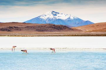 Pink flamingos on the lagoon, Altiplano, Bolivia