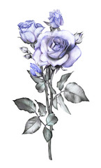 Poster Bloemen floral illustration -blue rose. branch with spines. flower with leaves isolated on white background. Cute composition for wedding or greeting card. bouquet.