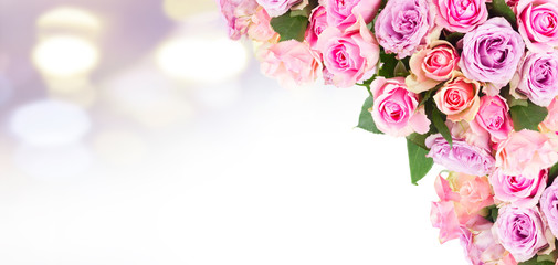 round bouquet of pink and violet fresh roses on bokeh background banner