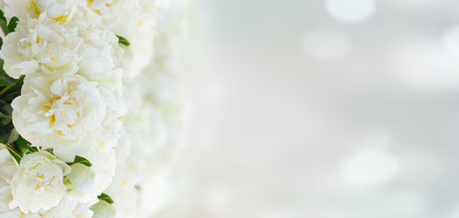 White peony flowers over blue bokeh background banner