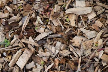 Wood chip footpath
