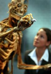 """A woman looks at plastinated human specimen called """"the teacher"""" at Gunther von Hagen's exhibition K.."""