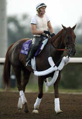 Breeders Cup horse Funny Cide walks down track at Lone Star Park in Texas.