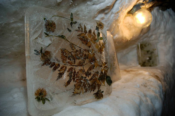 Picture shows plants frozen in a brick of ice and stored for many years in the unique Museum of ...