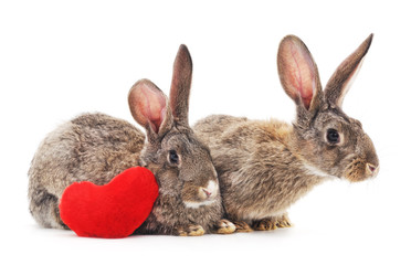 Two rabbits and heart.