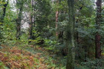 Tropical rain forest jungle flora tree fern green lush wild plants park garden Portugal