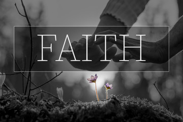 Faith text over hands nurturing a flower Wall mural