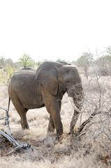 Nature in Africa
