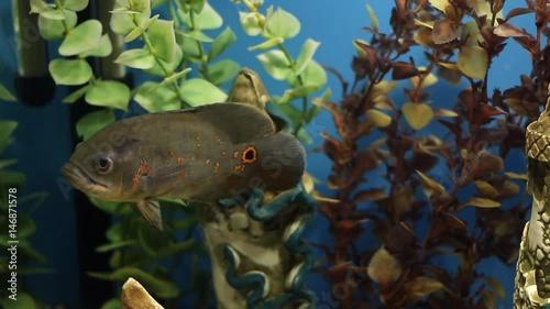 Colorful Aquarium Beautiful Fish Swimming In A Home Aquarium Fish