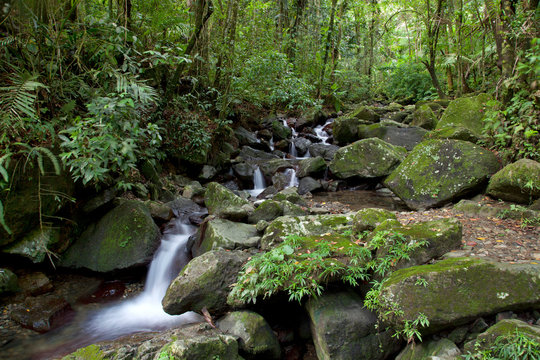 Stream in Caribbean National Forest of El Yunque, Puerto Rico